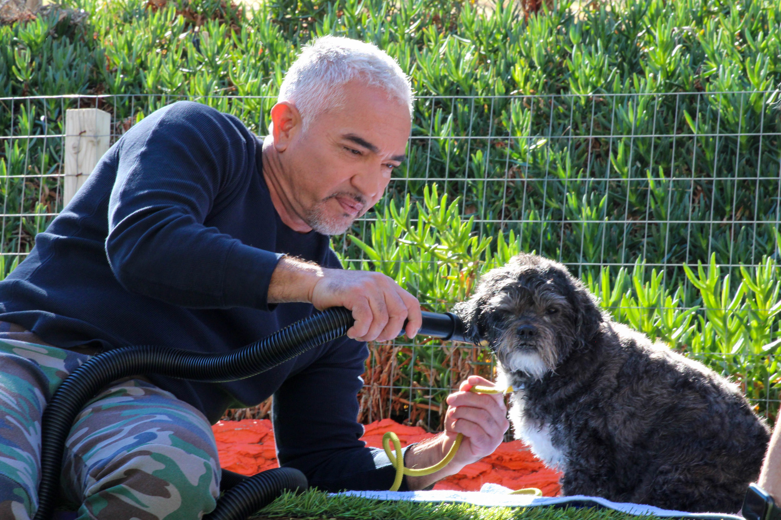 Cesar Millan Returns With Better Human Better Dog On National Geographic